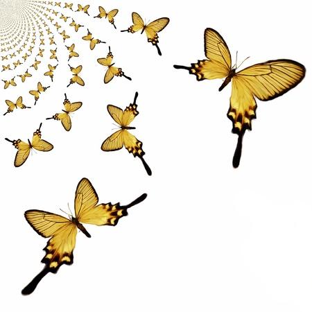 muster: Kaleidoscopic Butterflies Illustration