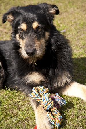 crossbreed: Yound crossbreed Dog