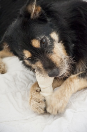 half breed: Yound crossbreed Dog