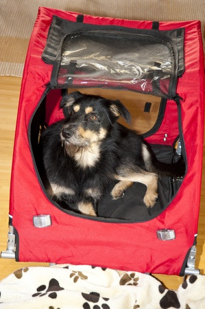 eyes cave: Young Dog in a Box
