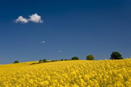 floristic: field in may
