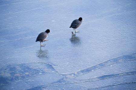 kiel: Ice Floes in Kiel, Germany