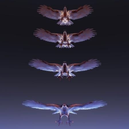 Digital Illustration of flying Eagles