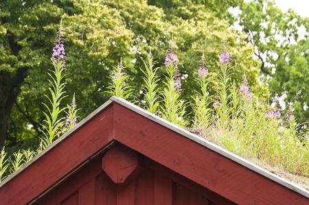 roof framing: Timber Frame House in Sweden