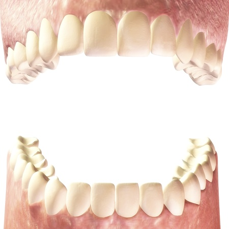 Ilustraci�n digital de dientes humanos photo