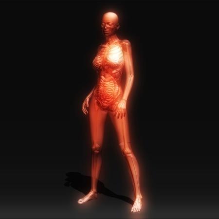 corps femme nue: Illustration num�rique de l'anatomie humaine Banque d'images