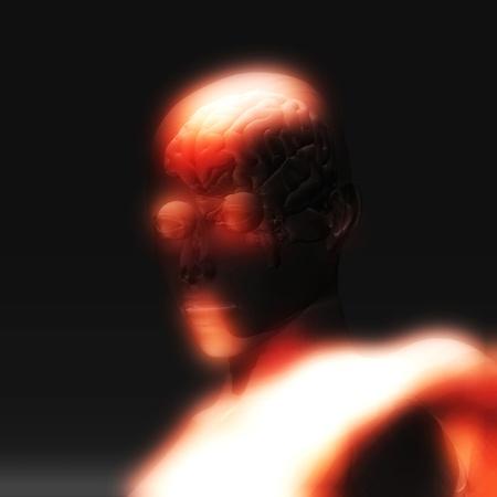 Digital Illustration of the human Brain Stock Illustration - 21804204