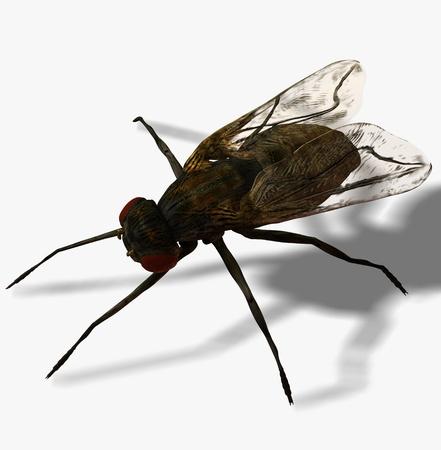 Digital Illustration of a Fly