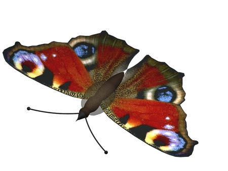 peacock butterfly: Digital Illustration of a Butterfly Stock Photo
