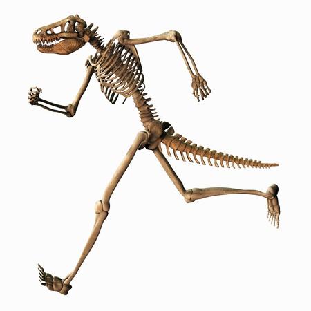 evolutionary: Illustration of a Chimeric Skeleton