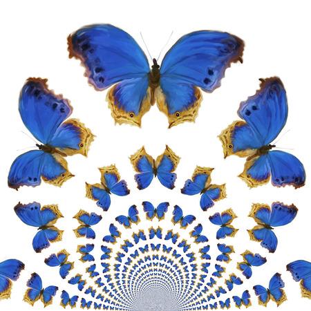 kaleidoscopic: Digital Painting of kaleidoscopic Butterflies Stock Photo