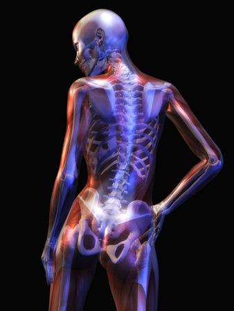 Digitale illustratie van de menselijke anatomie