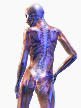 skeletal: Digital Illustration of the human Anatomy Stock Photo