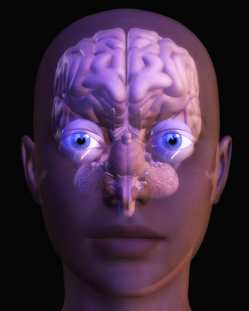 Digital Illustration of a human Brain illustration