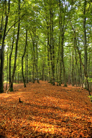 In the Forest of Darss in Germany, HDR Stock fotó