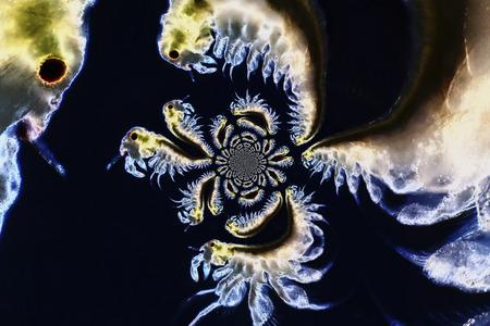 salina: Micro photo of Artemia Salina