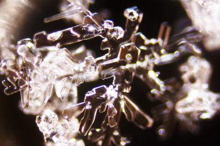 crystaline: Micro Photo of Snow Crystals