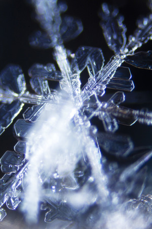 enlarged: Micro Photo of Snow Crystals
