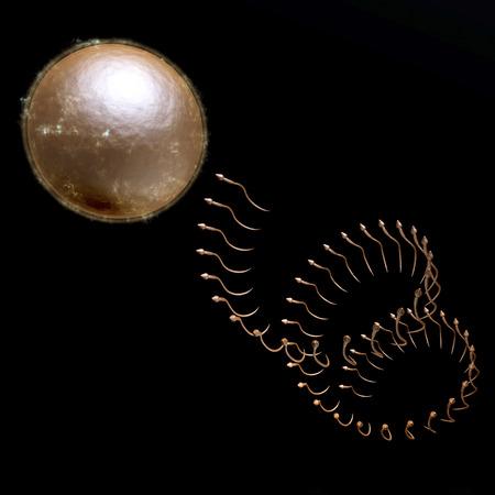 ova: Digital visualization of reproduction