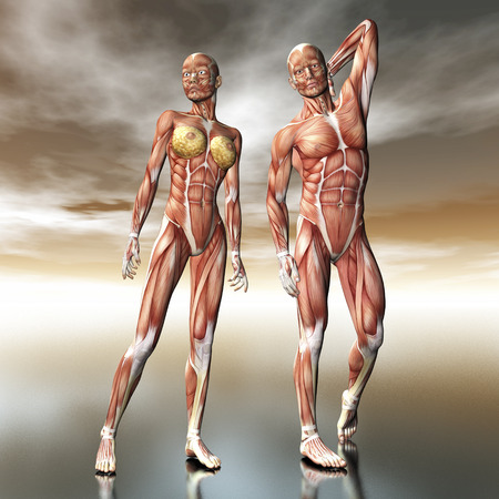 Digital visualization of human anatomy photo
