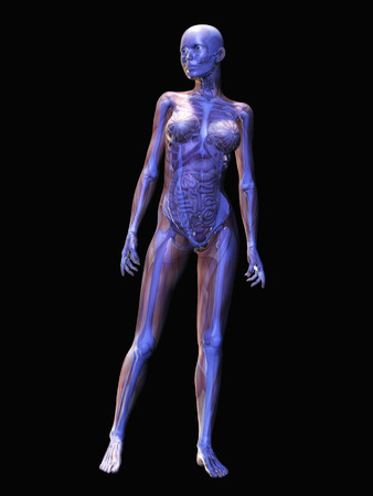 humane: Digital visualization of human anatomy