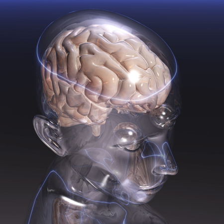 Digital visualization of a human brain photo