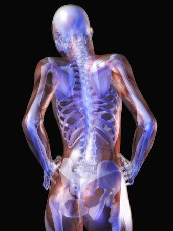 humane: Digital Visualization of Human Anatomy Stock Photo