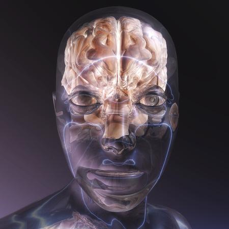humane: Digital visualization of a human brain Stock Photo