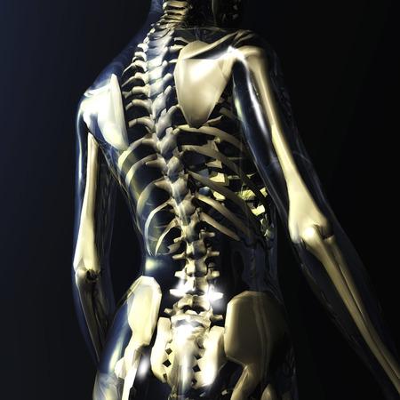 screened: Digital Illustration of a human Skeleton