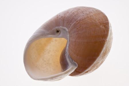 bionics: Close up of a Snail Shell Stock Photo