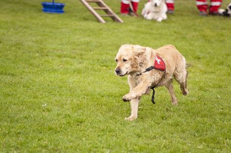 Formación de un Escuadrón de Perros de Rescate Foto de archivo - 38070569