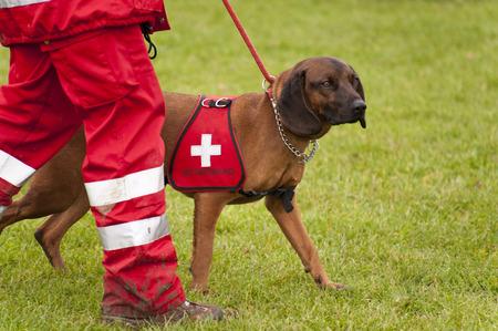 salvavidas: Formaci�n de un Escuadr�n de Perros de Rescate Foto de archivo