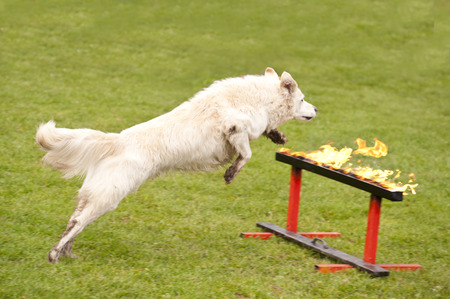 hindrance: Training of a Rescue Dog Squadron