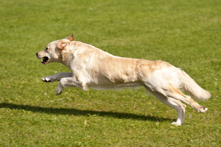 omitted: Dog Race
