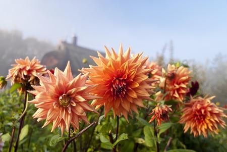 Flowering Garden photo