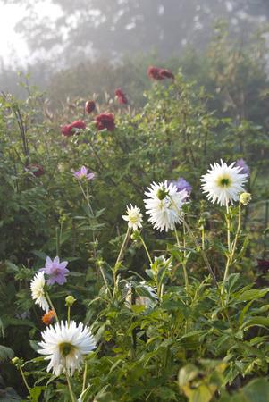 blumen: Flowering Garden Stock Photo