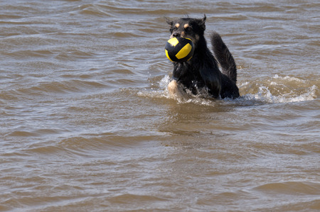 omitted: Dog bathing in the North Sea
