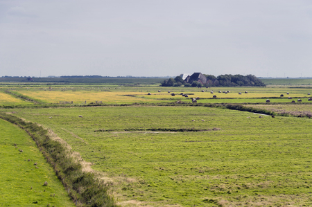 westerhever: Marshland of Westerhever in Germany