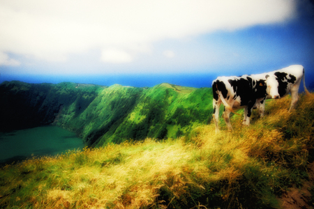 agriculture azores: Moody Scene in the Azores, Portugal Stock Photo