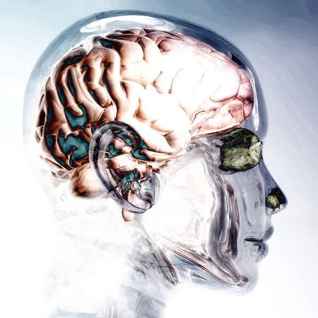 visualization: Digital Visualization of a Human Brain