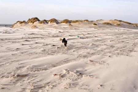 Dog at sandy Beach of Amrum in Germany