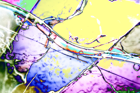 polarization: Light Graphics: Microphoto of translucent structures in polarized light