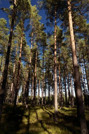 heathland: Forest and heathland in Sweden Stock Photo