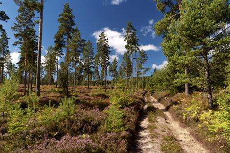heathland: Heathland in Sweden