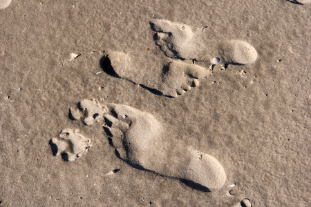 wadden: Footprints in the Wadden Sea