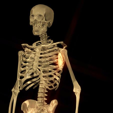 Representación 3D Digital De Un Esqueleto Humano Fotos, Retratos ...
