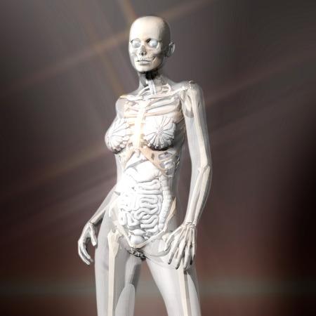 Digital 3D Rendering of the female human Anatomy
