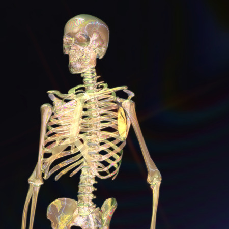 computer animation: Digital 3D Rendering of a human Skeleton Stock Photo