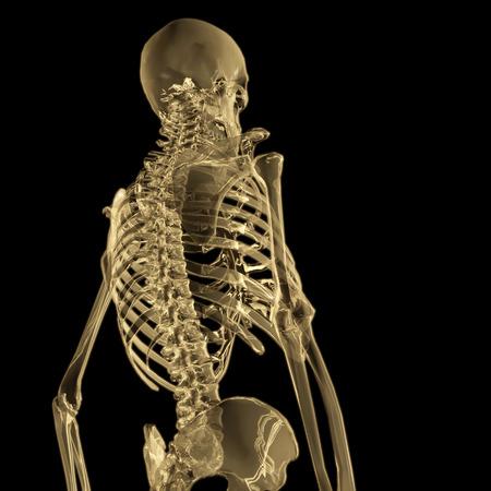 Digital 3D Rendering of a human Skeleton Stock Photo