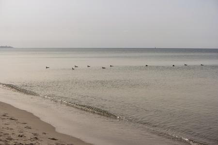 Ostseeküste in der Nähe von Ahrenshoop in Deutschland Standard-Bild - 90232413